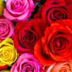 أجمل صور ورد رومانسية 2019 صور زهور ملونة وجذابة