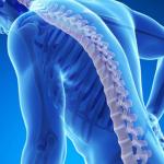 معلومات وصور عن هشاشه العظام