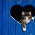 صور غلاف قطط للفيس بوك 2019 ,مجموعة صور قطط كيوت للفيس بوك