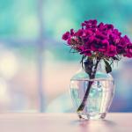 مجموعة أجمل صور ورد رومانسي 2019 , صور ورد مبهجة بجميع الألوان