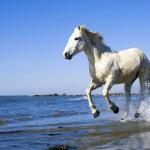 اقوي صور حصان جميع الالوان 2019