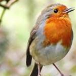 تشكيلة خلفيات عصافير 2019 خلفيات طيور جميلة
