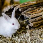 أجمل صور أرانب 2019 صور ارنب جديدة