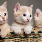 أحلى صور قطط كيوت 2019 أجمل صور قطط رومانسية