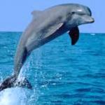 صور دلفين 2019 متنوعة