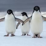 بطريق 2019 أجدد صور طائر البطريق