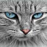 تفسير حلم القطط في المنام ومعناها