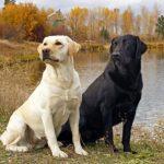 تفسير رؤية الكلب في المنام للفتاة العزباء