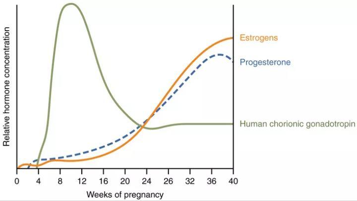 تحليل هرمون الحمل الرقمي