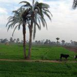 موضوع تعبير عن الريف المصري للمرحلة الابتدائية بالعناصر