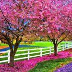 موضوع تعبير عن فصل الربيع بالعناصر للطلاب
