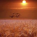صور رومانسية لشروق الشمس في بعض الأماكن