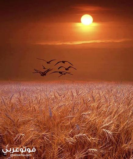صور رومانسية لشروق الشمس في بعض الأماكن فوتو عربي