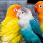 موضوع تعبير عن الطيور بالعناصر وأهميتها
