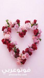 خلفيات صور وردية رومانسية للهاتف